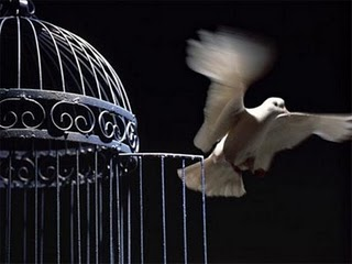 flying-bird-out-of-its-cage-the-best-for-the-post